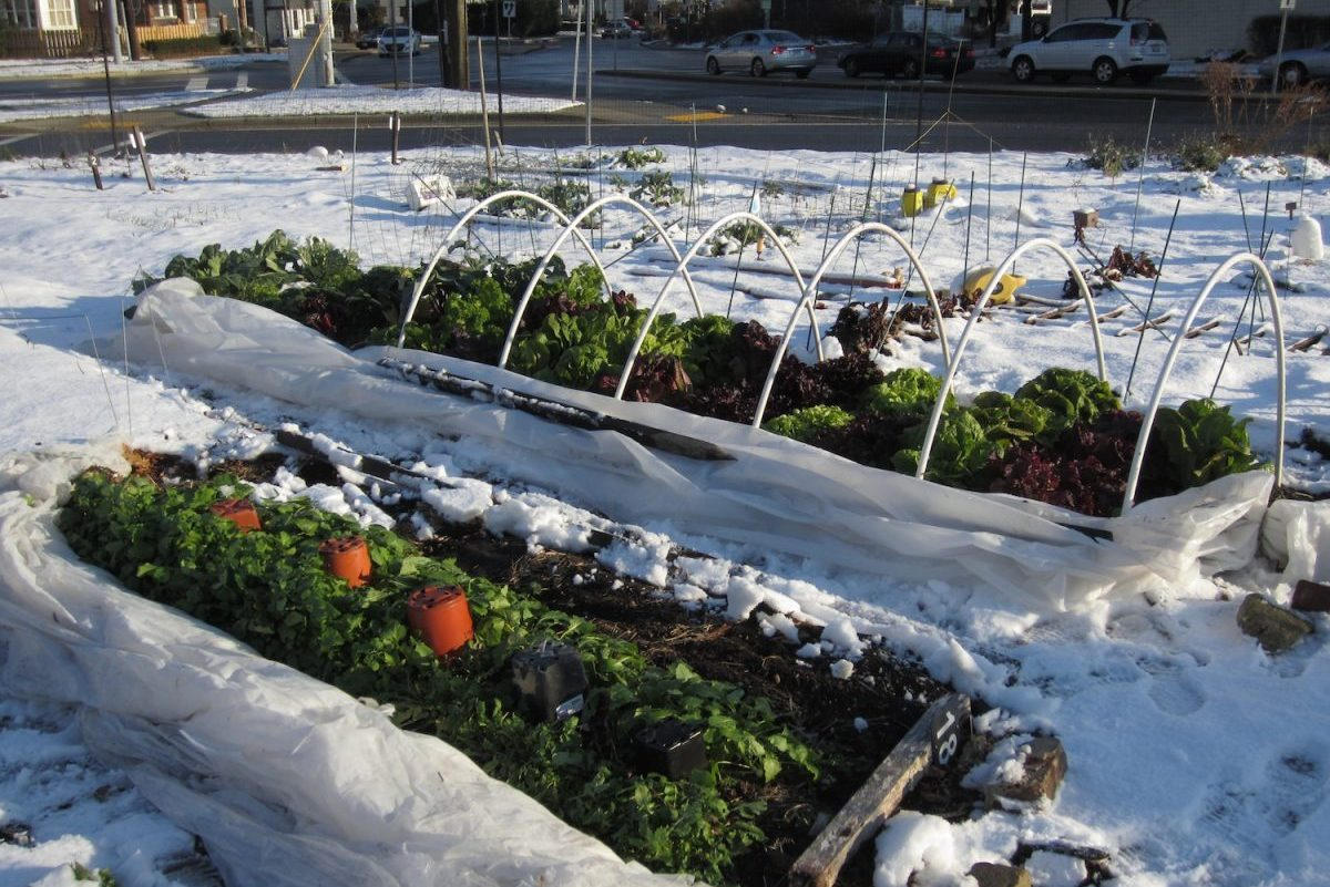 Winter Gardening: How I Water My Winter Tunnels