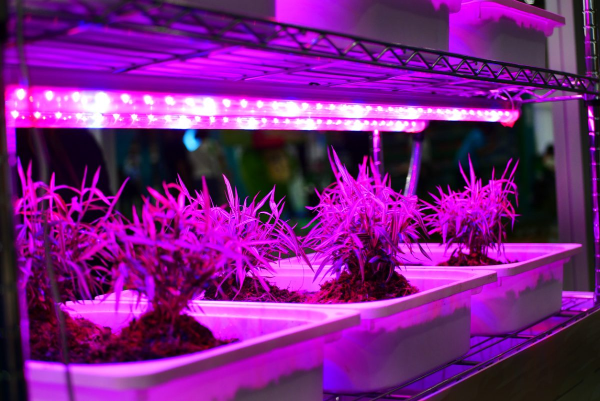 Tips for Choosing the Ideal Grow Lights